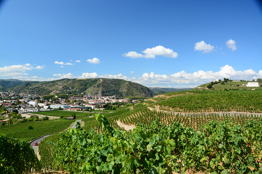 View of vineyards in the Rhone Valley.