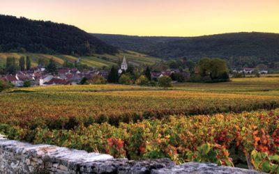 Burgundy That Won't Break the Bank