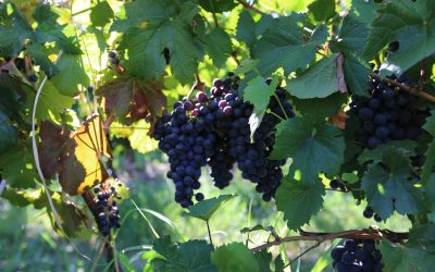 Are You A Wine Industry Expert Quiz?